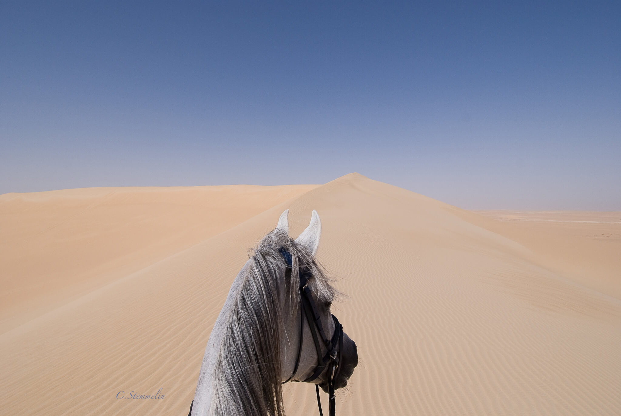 9 Arabian Horse Safari
